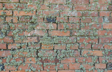 Old moss-grown brick wall as background