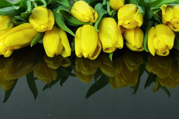 tulipany na czarnym tle