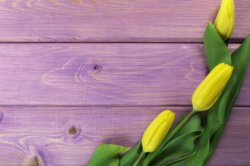 tulipany w fioletach