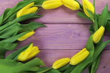 tulipany w fiolecie