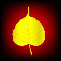 Boh Leaf