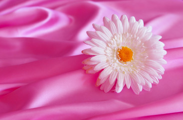 Flower, silk, texture, background.