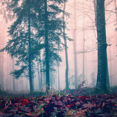 Misty red color woods