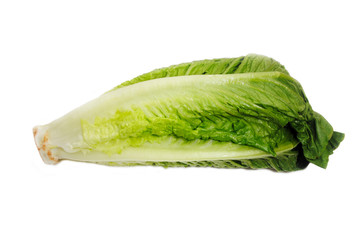 Fresh Organic Romain Lettuce Over a White Background