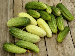 home grown cucumbers different varieties