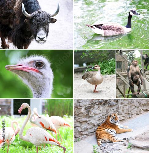 Fotobehang Vlinder Zoo collage