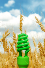 green eco bulb in field with harvest