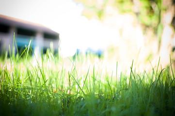 Controluce erba