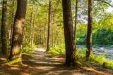 Fototapety Forest Trail