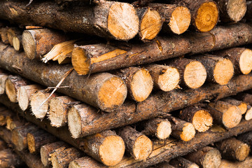 wooden logs storage, closeup view