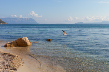 Seagull at Sardinia coast.