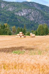 Straw bales on field at summer