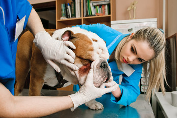 veterinarians women