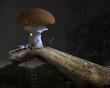 Obrazy na płótnie, fototapety, zdjęcia, fotoobrazy drukowane : Fairytale mushroom house under the starry night sky.