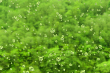 Rain falls in the rainforest. Droplets focus the jungle behind.