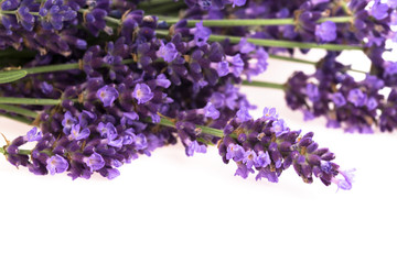 Lavender flowers on the white background