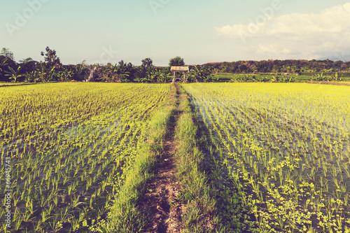 Foto op Plexiglas Indonesië Rice terrace