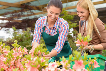 Garden center woman show flowers to customer