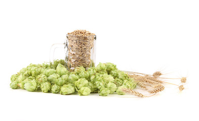 Fresh barley and hop.