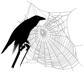 halloween theme raven with spider web decor