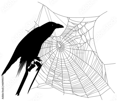 halloween theme raven with spider web decor © Cattallina