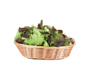 Green and red leaf of lettuce in basket.