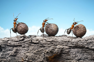 team of ants rolling stones on rock, teamwork