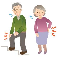 シニア 膝の痛み 腰痛