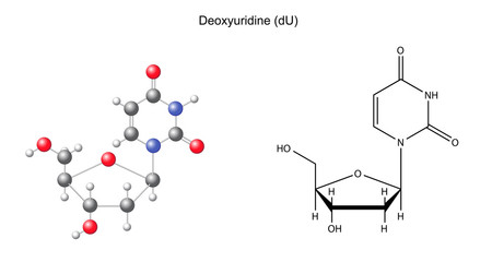 Structural chemical formula and model of deoxyuridine