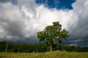Tree under the clouds
