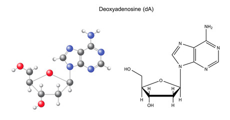 Structural chemical formula and model of deoxyadenosine