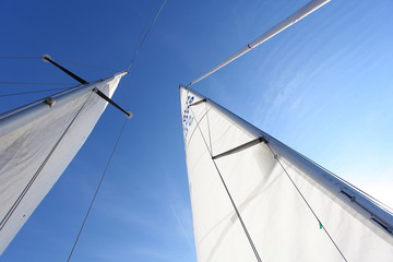 raised the white sails of yachts on the background of blue sky