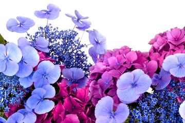 Hortensienblüten vor Weiß