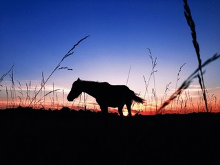 Silhouette of horse on sunset