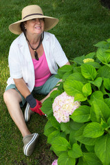Happy senior lady weeding a hydrangea bush