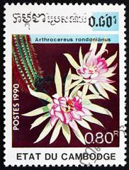 Postage stamp Cambodia 1990 Arthrocereus Rondonianus, Cactus