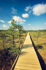 Wooden path at the bogs