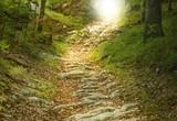 Fototapety Steintreppe führt zu einer Waldlichtung