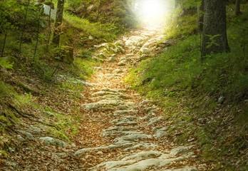 Steintreppe führt zu einer Waldlichtung © Jamrooferpix