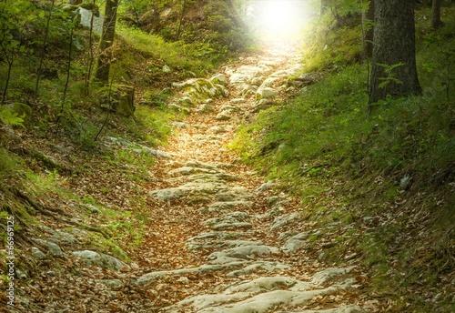 Aluminium Bossen Steintreppe führt zu einer Waldlichtung