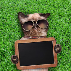 Cat with an blank and empty blackboard or placard