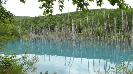 青の池;北海道美瑛町