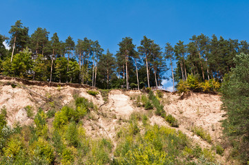 Trees on the Scarp of Sand in the Forest
