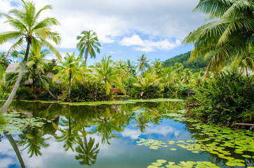 Tropical pond is surrounded by lush vegetation