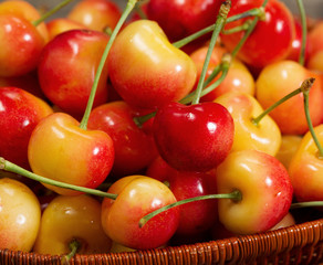 Fresh Rainier cherries in basket