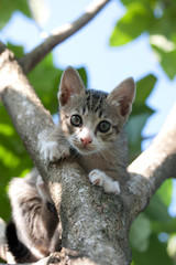 Pretty cat kitten on tree