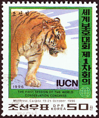 Tiger (North Korea 1996)
