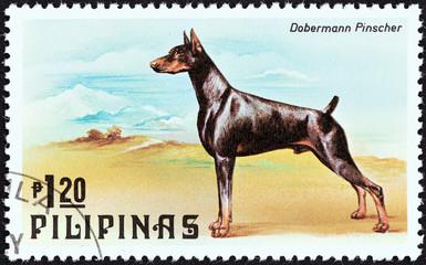 Dobermann pinscher (Philippines 1979)