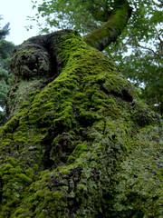 苔のある樹皮