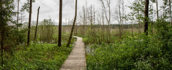 swamp panorama